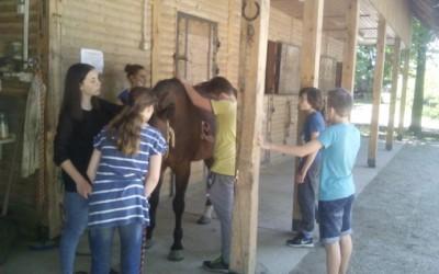 Z izbirnim predmetom in krožkom o konjih obiskali Ranč Ložar v Mačkovcih